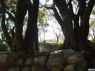三光神社の木
