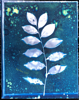 Wet Cyanotype_Sue Reno_Image 169