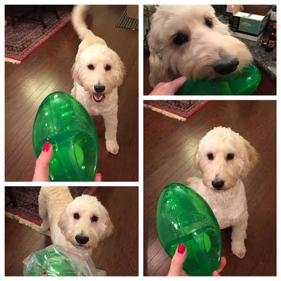 goldendoodle kong toy