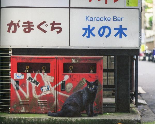 karaoke bar cat