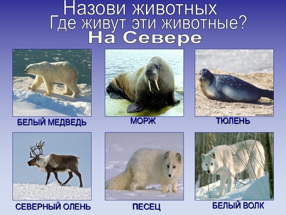 Конспект занятий животные севера