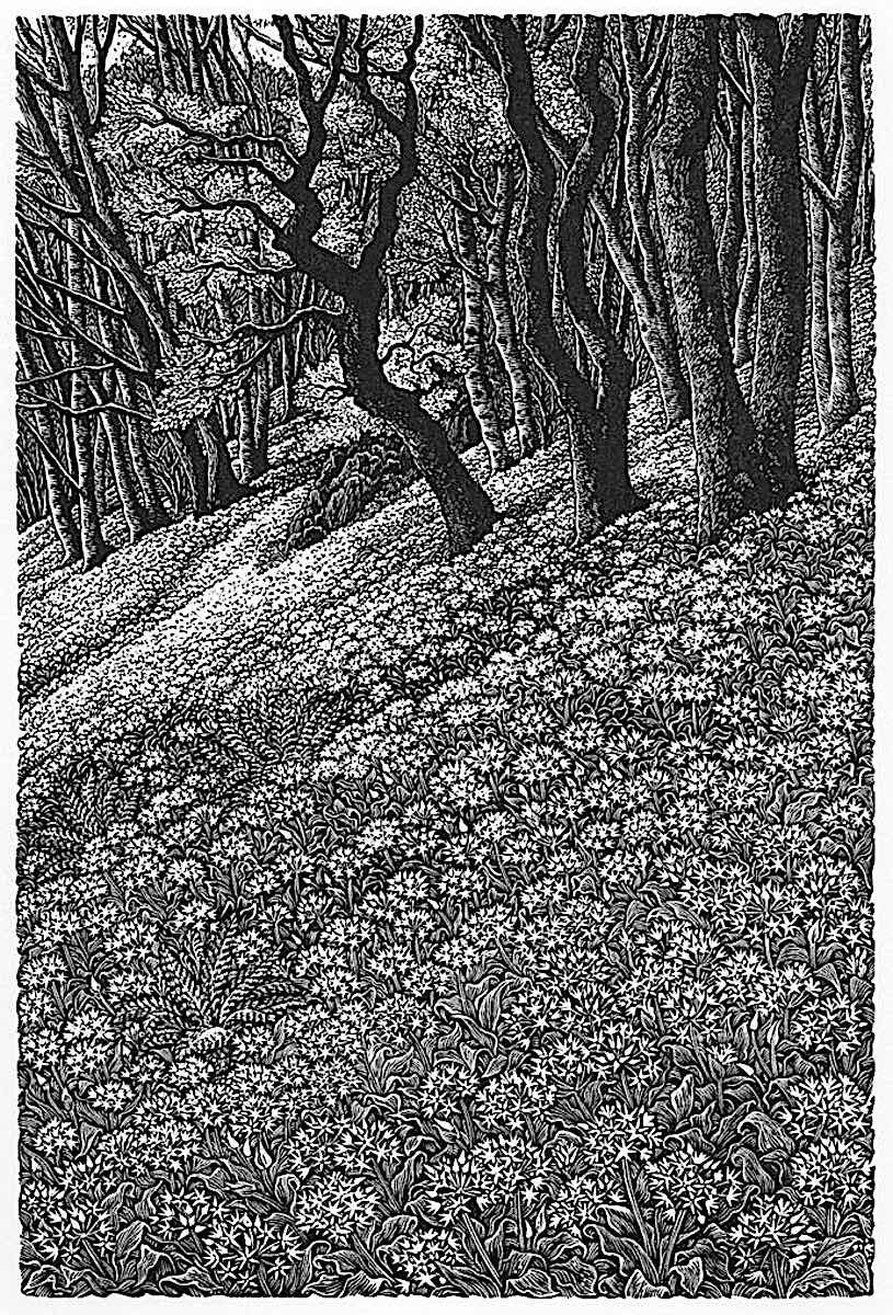 a print by Sue Slancullard, forest art