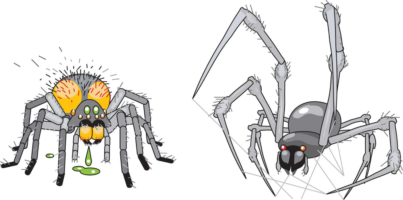 Blue Boxer Rebellion Icons Wolf Spider And Orb Spider