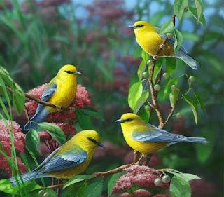 setingan kenari lomba,cara memelihara burung kenari,cara melatih burung kenari,perawatan kenari agar cepat gacor,merawat kenari muda,