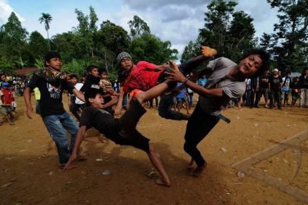 Tradisi Adu Betis Dari Sulawesi Selatan