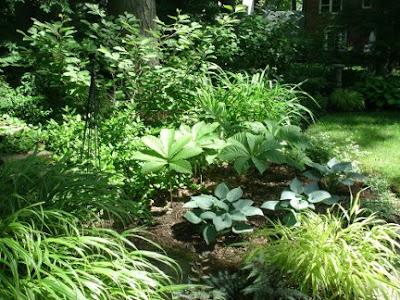 Dappled shade garden with Japanese forest grass, Rodgersia, Halcyon hostas by garden muses: a Toronto gardening blog