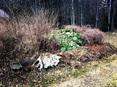 kasvisaareke täynnä erilaisia pensaita ja kasveja