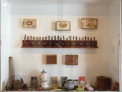museo de plantas1