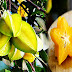 CARAMBOLA FRUIT TO CONSUME AND TO FIGHT DISEASES