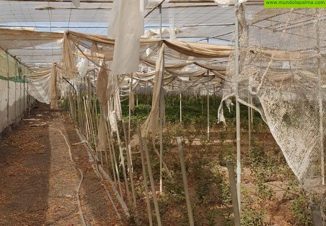 El Gobierno canario convoca las subvenciones para sufragar los daños ocasionados por el temporal de febrero