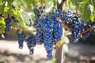anggur-www.healthnote25.com