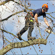 Difference Between Large and little Tree Felling Manchester tree surgeon