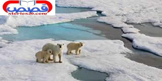 الحياة على القطب الشمالي