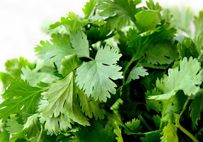 coriander-cilantro-chinese-parsely-fresh-leaves-tastes-like-soap-metal