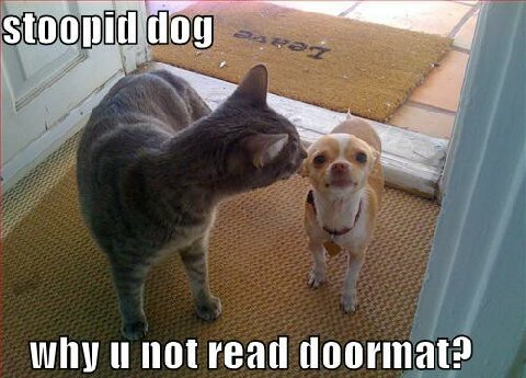 Funny Animals Zone Funny Cats And Dogs With Captions Cute Funny