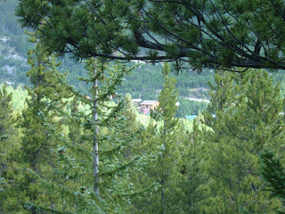 Looking through the pines at Ski Town Condos in the distance.