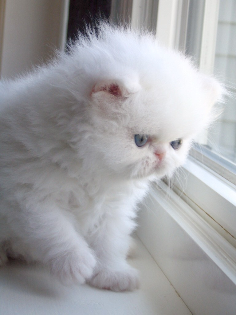 Cute Kittens | HD Wallpapers (High Definition) | Free ...