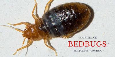 bristol bed bug control
