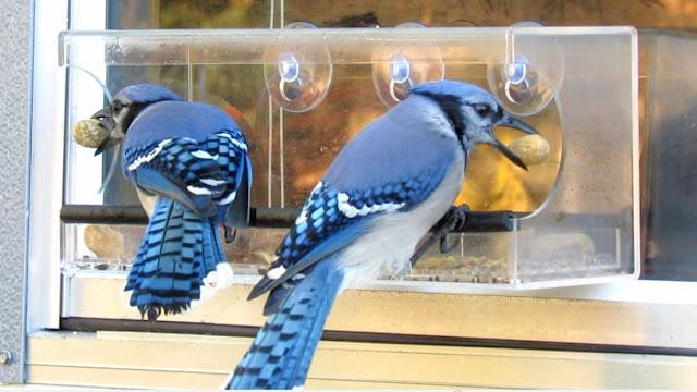 See-Through Clear Window Bird Feeder