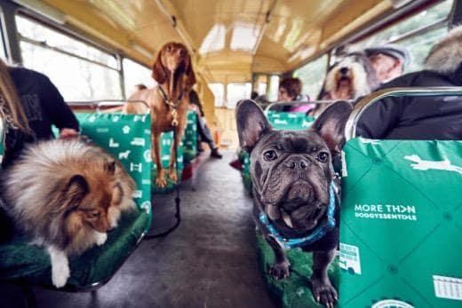 Londres pone en marcha el primer autobús turístico para perros