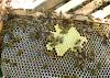 Πότε δίνουν μέλι οι ανθοφορίες: Πότε έχουμε φούλ νεκταροέκκριση και πότε δουλεύουν τα μελίσσια