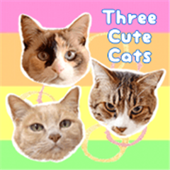 Three Cute Cats