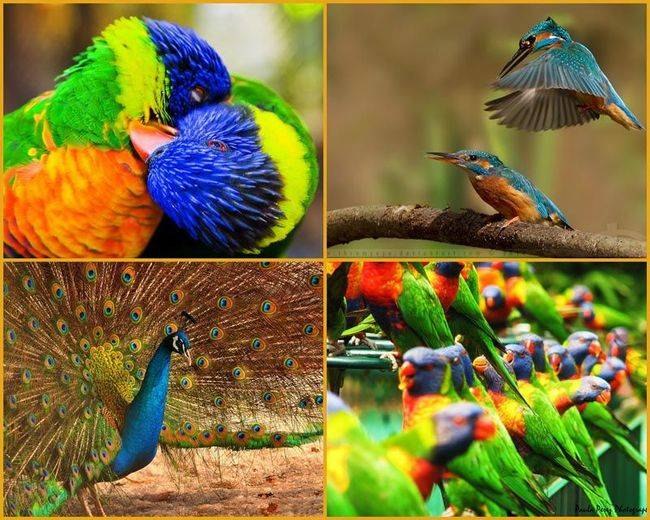 Amazing World & Fun: Beautiful Colorful Birds - Nature - photo#15