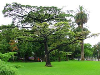 Árvores de Grande Porte na Entrada do Rosedal, em Buenos Aires