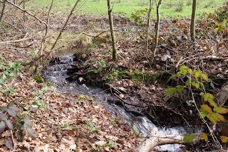 Ein kleiner Bach fließt durch den Wald