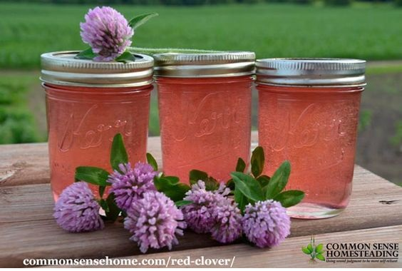 Red Clover Jelly