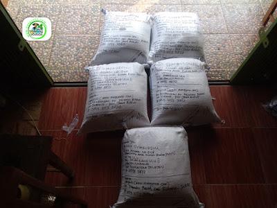 Benih Padi Pesanan  BENNY SYAFRUDDIN Palembang, Sumsel.  Benih Sesudah di Packing