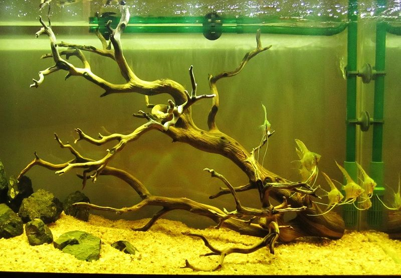 driftwood untuk aquarium