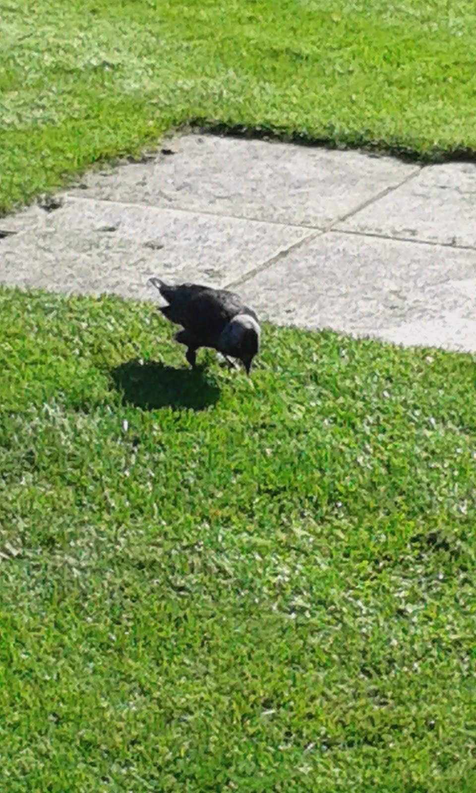 Μεγάλο λεία αναπηδά στο μεγάλο πουλί