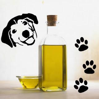 Azeite de oliva para cachorro - Usos e benefícios...