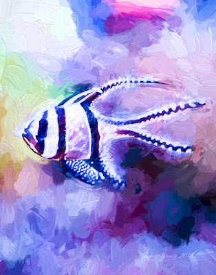 Spotted and Striped Tropical Fish