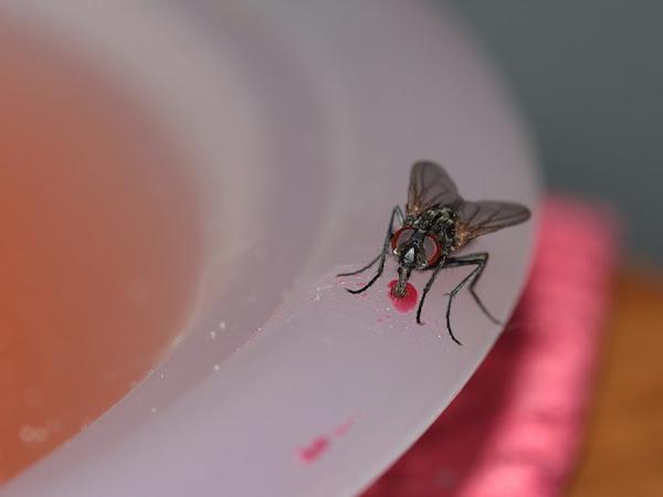4 Cara Sederhana Usir Lalat dari Rumah