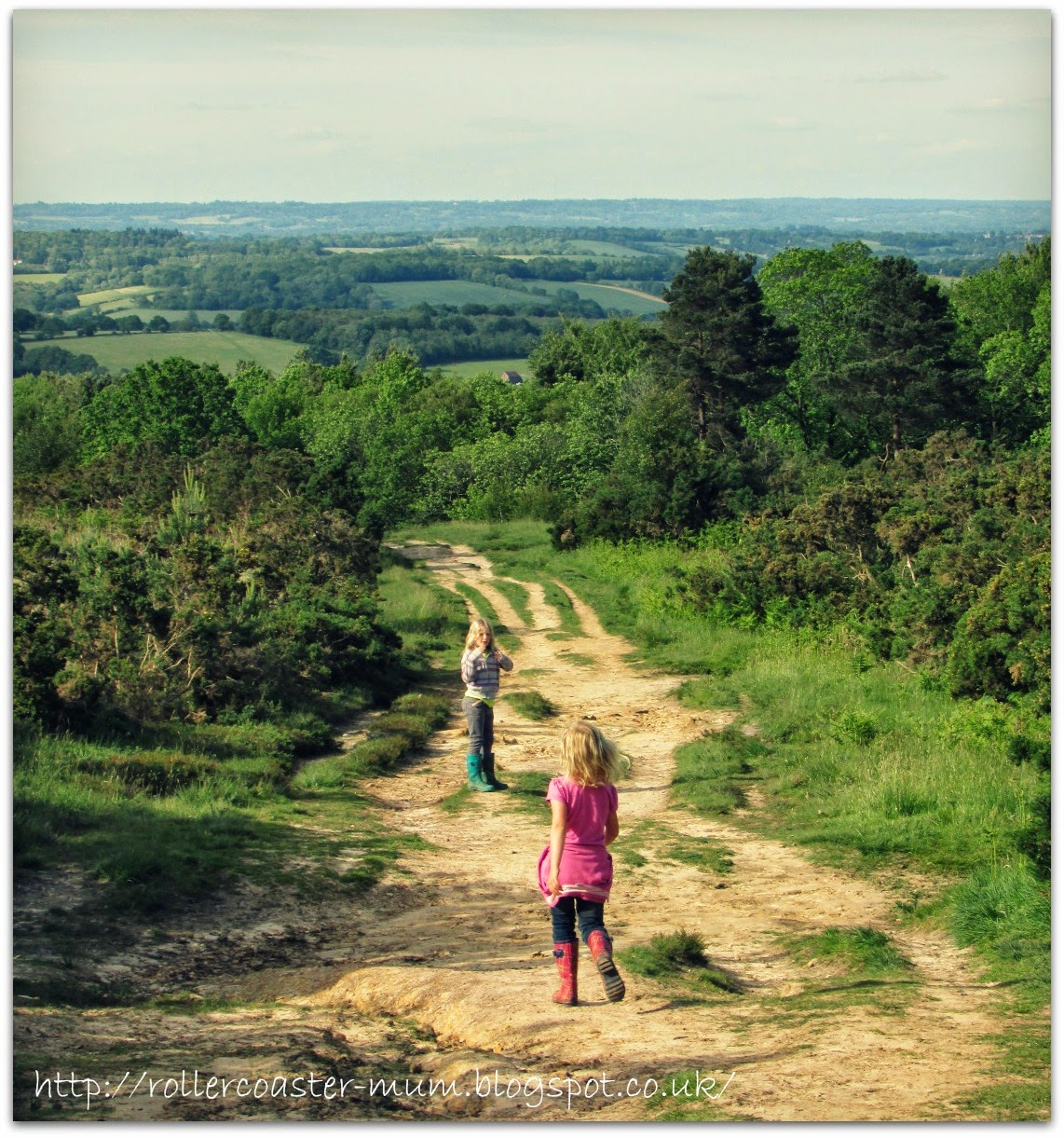 Typical Winnie the Pooh country, Ashdown Forest