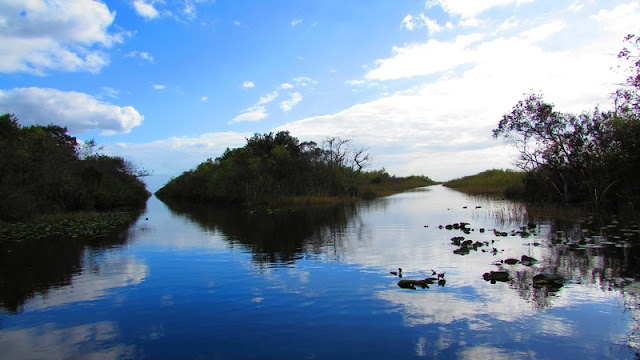 a scenery that you will find when boating at Everglades National Park