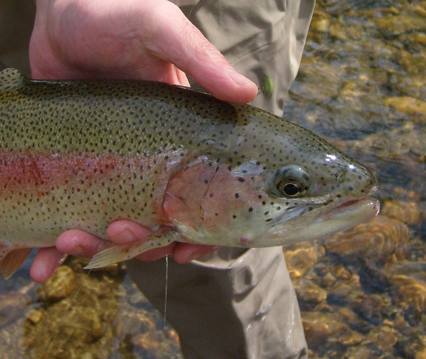 Vermont fly fishing full day trip fly fishing in vermont for Vermont trout fishing