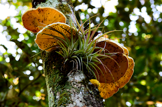 fungus and air fern growing on tree