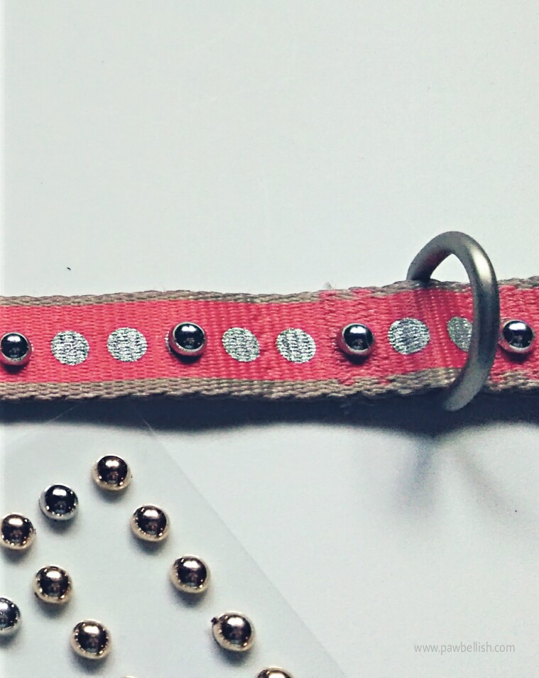 Orange dog collar embellished with silver rounded gems