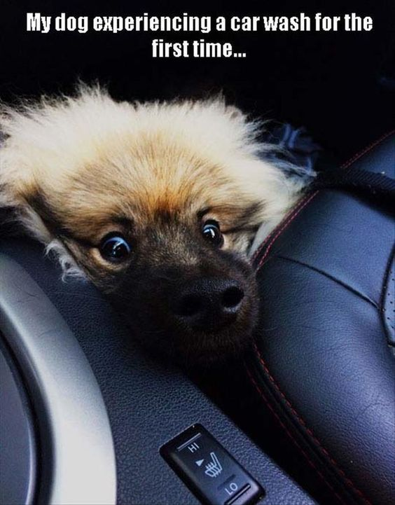 Funny Dog's First Car Wash Joke Picture