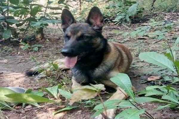 bharat-mata-ka-lal-dog-cracker-martyred-in-anti-naxal-operation
