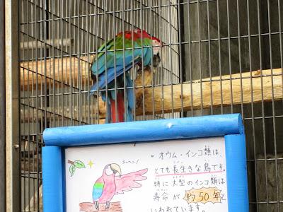 神戸市立王子動物園 ベニコンゴウインコ