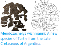http://sciencythoughts.blogspot.co.uk/2016/10/mendozachelys-wichmanni-new-species-of.html