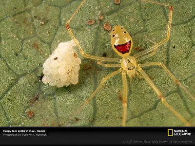 Gambar labah-labah unik dengan telur labah-labah. Corak orang senyum pada labah-labah tersebut.
