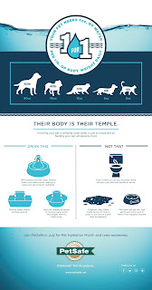 An infographic explaining the advantages of pet fountains over traditional water bowls.