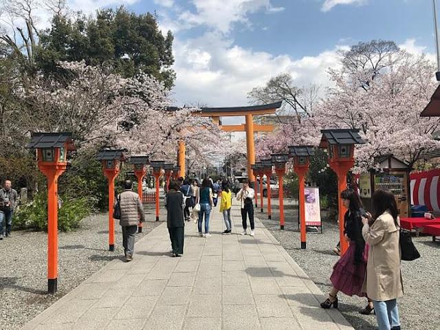 平野神社の花見