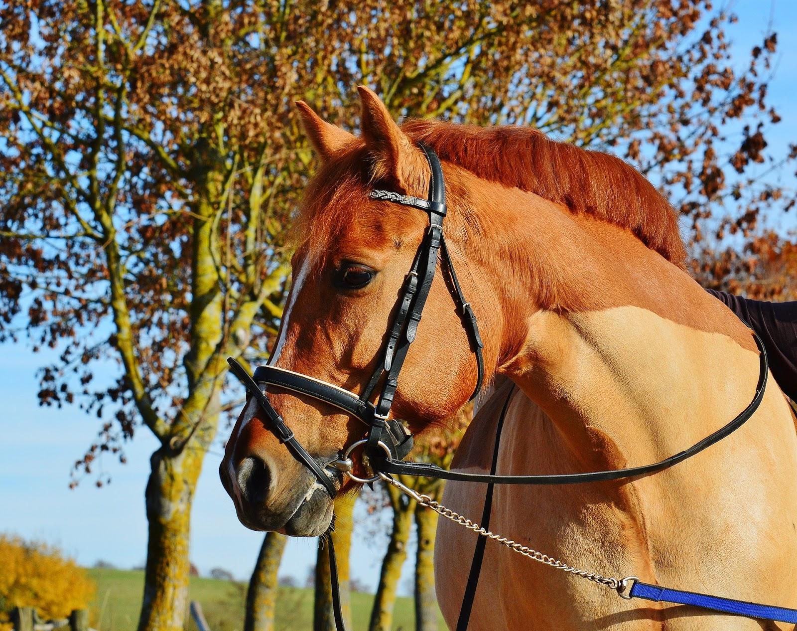 Czy jeżdżąc konno można schudnąć
