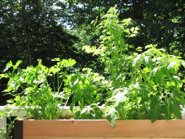 Tamdoll's Standing Garden @GardenersSupply. I may never go back to regular gardening after this. tamdoll.com